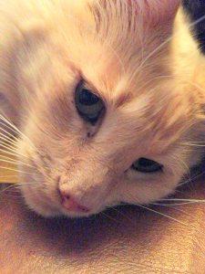 cat sitter client