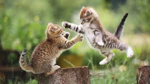 two kittens jumping picture
